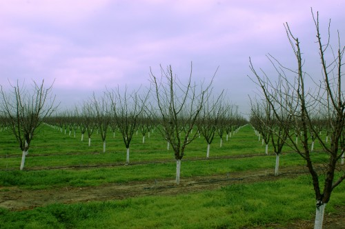 Roadside Orchard