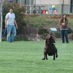 Dixie catching a ball thrown by Taj with Corinna watching
