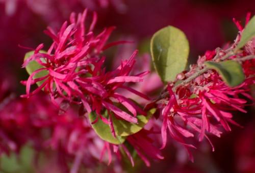 Some flowering bush