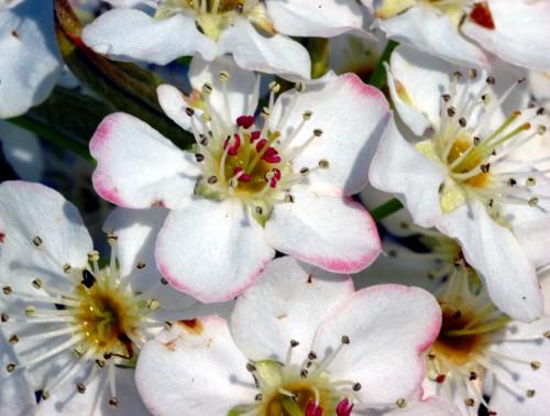 A flower cluster